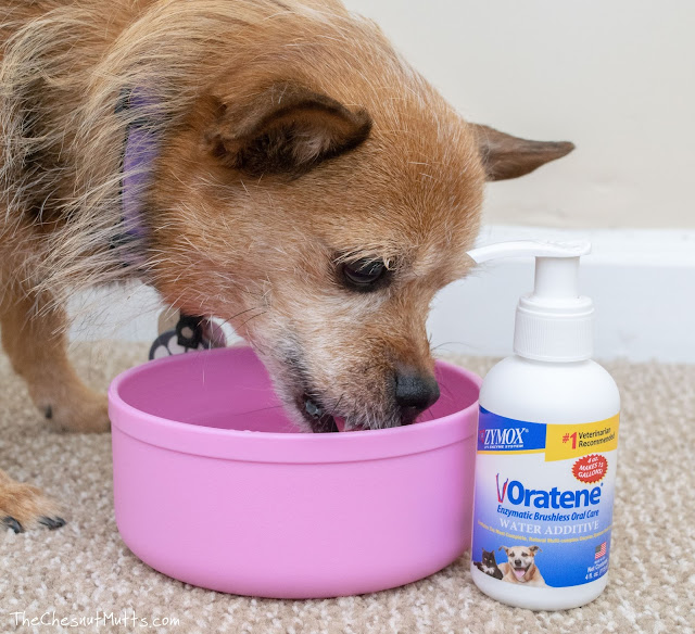 Jada drinking water with oratene water additive