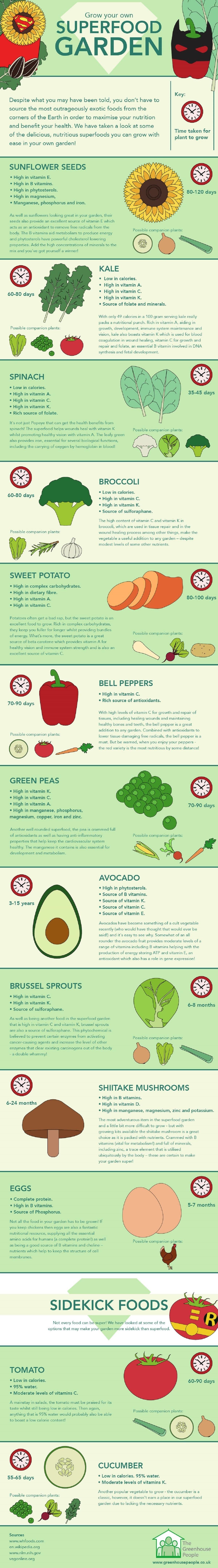 Superfood Garden #infographic