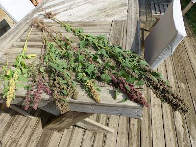 quinoa kokopelli