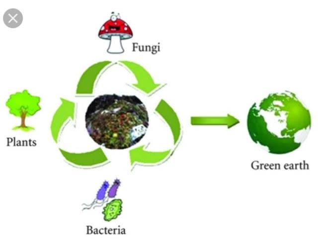 Manfaat Mikroorganisme Dalam Penanganan Limbah dan Bioremediasi
