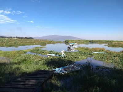 laguna de yuriria lake conservation reforestation ecosystem guanajuato mexico