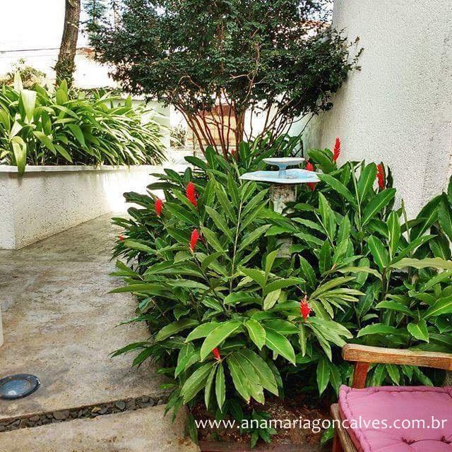 jardim-com-muitas-plantas-e-fonte-de-agua