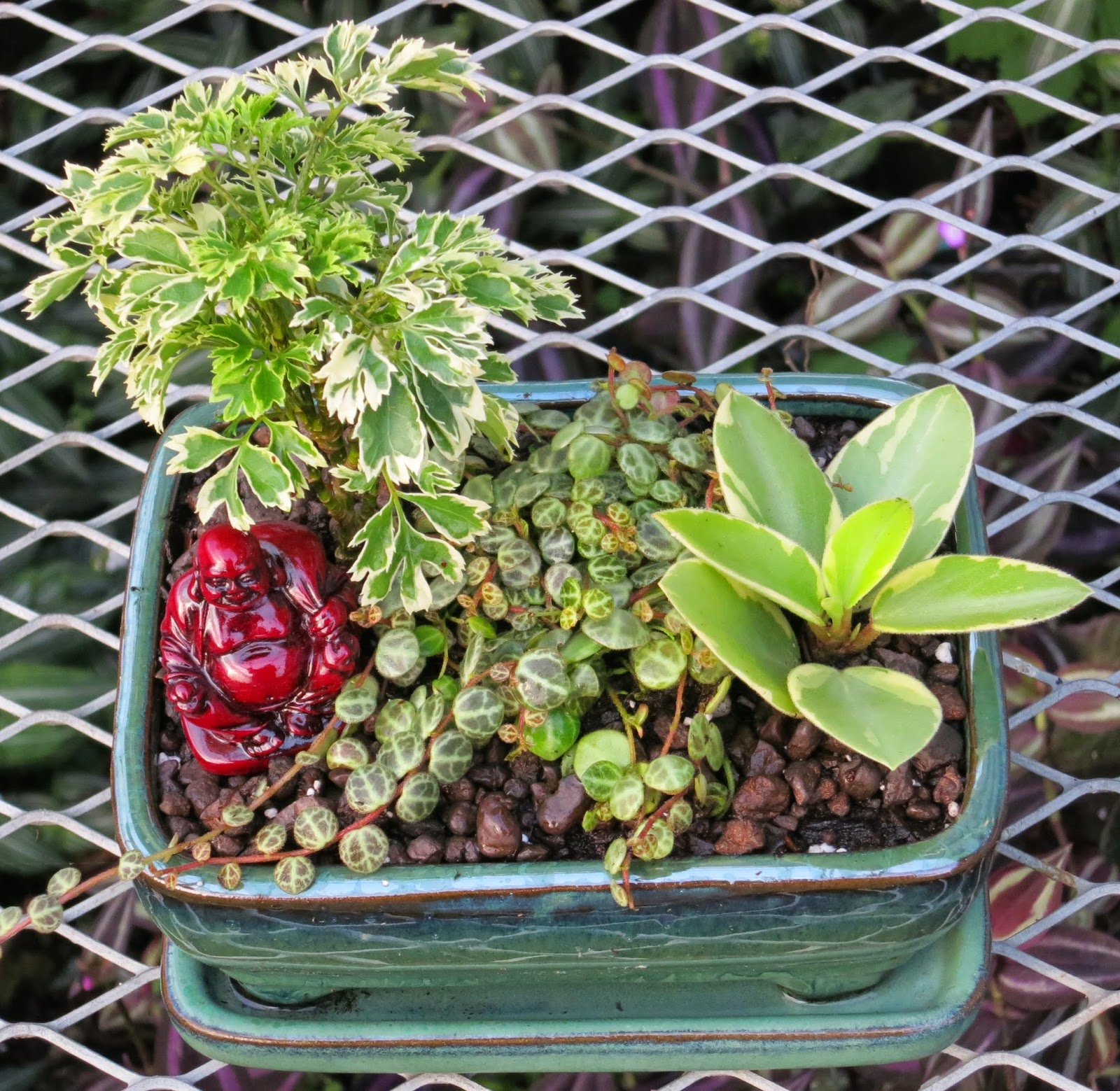 Asian Tray Garden A New Type Of Miniature