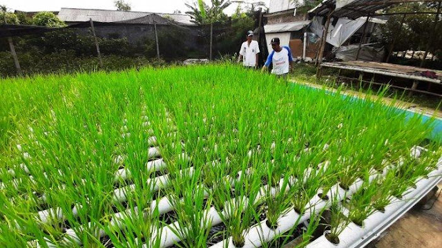 Metode pertanian ini tak memerlukan lahan yang luas sehingga bisa memanfaatkan areal kosong di sekitar rumah