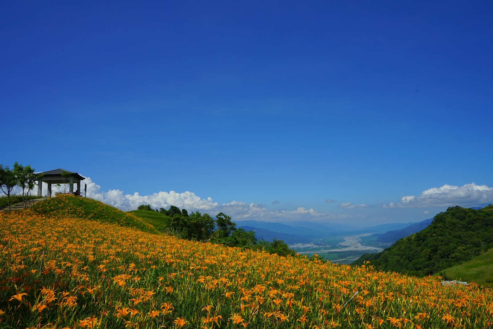 DSC01303-beautyanxiety.com-hualien-travel-liushidan-mountain-daylily-flowers