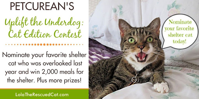 petcurean uplift the underdog: cat edition contest