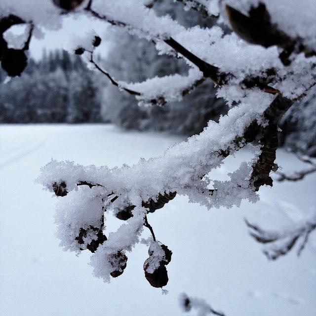 luminen, luonto