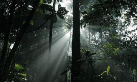 Hutan Hujan Tropis dan Contohnya
