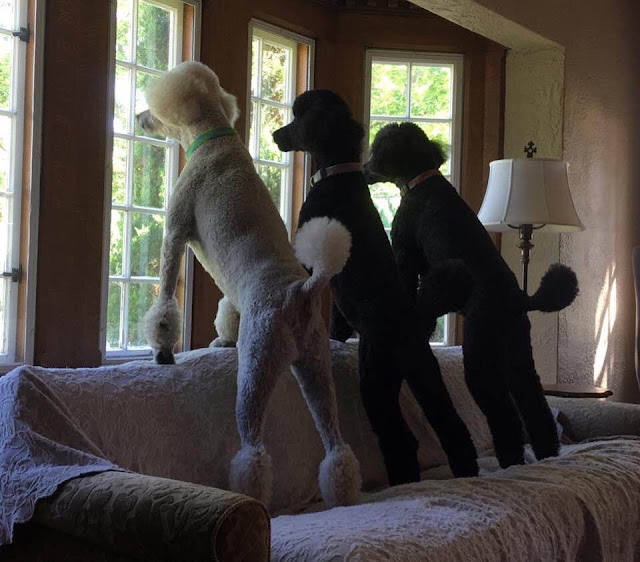Moving With Pets: Things To Consider To Make The Process Easier