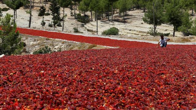 قطاع الزراعة التركي يحقق أعلى مستوى صادرات في تاريخه
