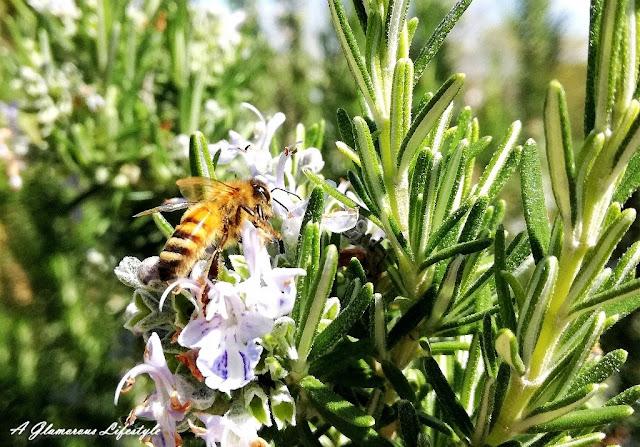 veleno d'api proprietà