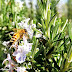 Veleno d'api contro le rughe: funziona? Quali sono i benefici e quale scegliere