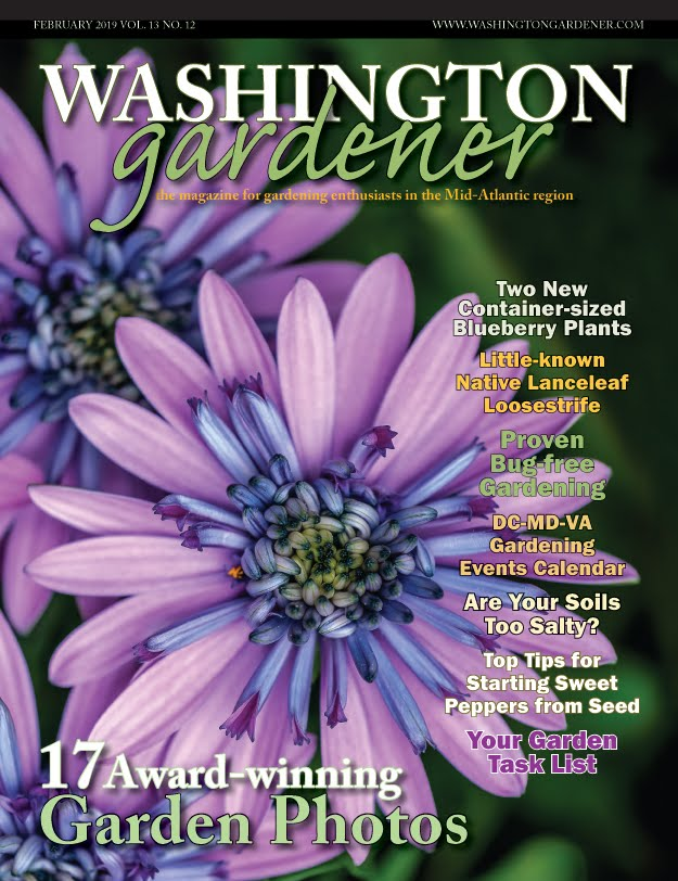 WashingtonGardener