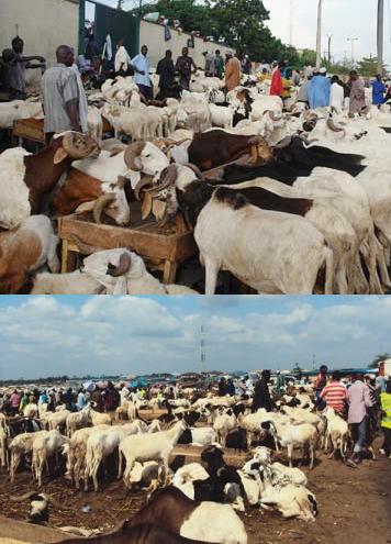 big ram market in northern nigeria