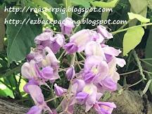 津島天王川公園紫藤祭遊記+交通