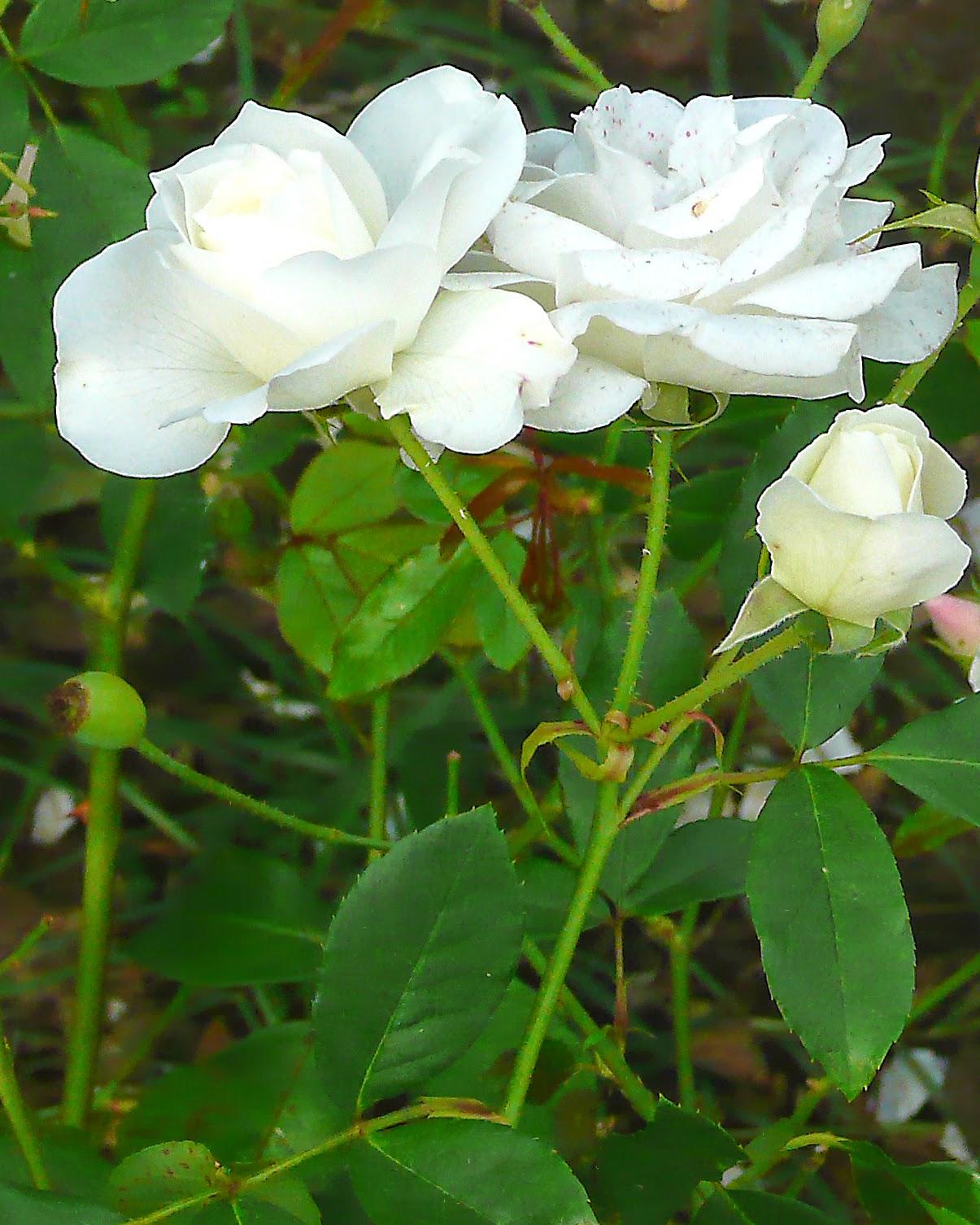 Ramillete de flores blancas