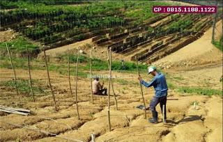 Jual Tanah Bekasi Murah, Kebun Vanili Dan Durian, Dekat Jalan,  WA : 0815.1188.1122