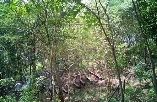 Foto Hutan Kota Trenggalek 9