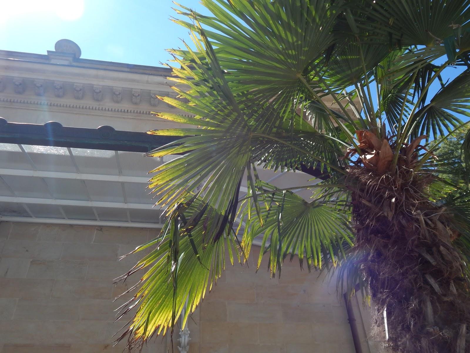 Karlovy Vary palma