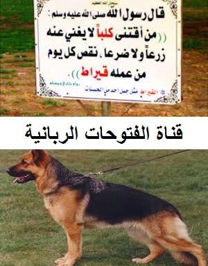 بيريسكوب الكراك ابنة الاخ حكم تربية الكلاب في الاسلام Sjvbca Org