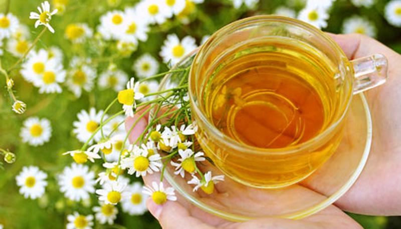 Ромашка аптечная лечебные свойства чай