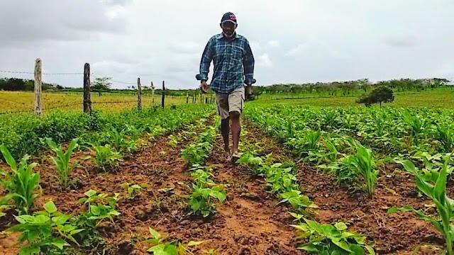 Prefeitura de Piranhas investe mais de R$120 mil na agricultura familiar