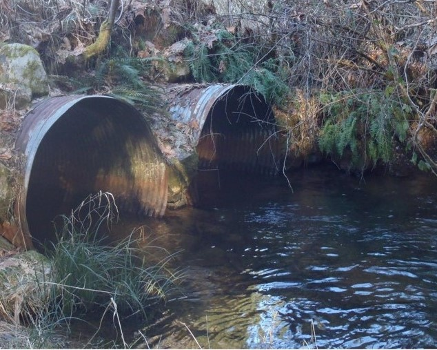 Barrier culverts on Bush Creek near Elma to be replaced with fish-passable structures.
