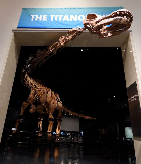 Colossal dinosaur cast goes on display in NY