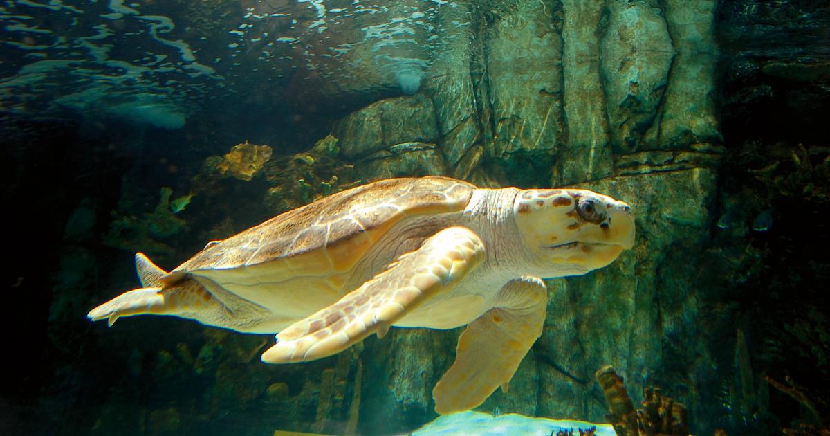 FORT THOMAS MATTERS: Newport Aquarium Now Open for ...