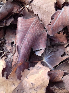 dry leaf with white seed