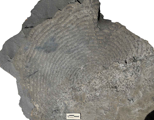 Scientists develop new method for studying early life in ancient rocks