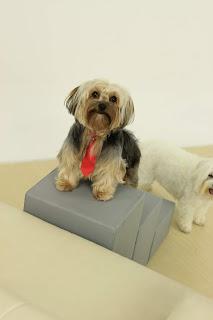 escadas ortopédicas para cães de pequeno porte
