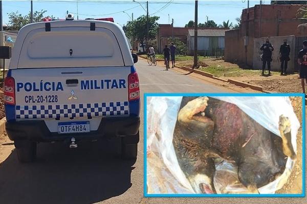 """Rottweiler ataca e mata cadelinha Basset que passeava com o dono; proprietária da """"fera"""" pode responder na justiça"""