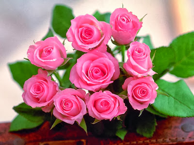 The-Rose-of-Love-roses