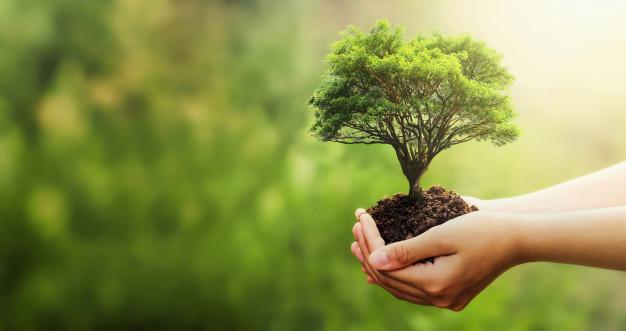 7 Alasan Mengapa Menanam Pohon adalah Amal Jariah