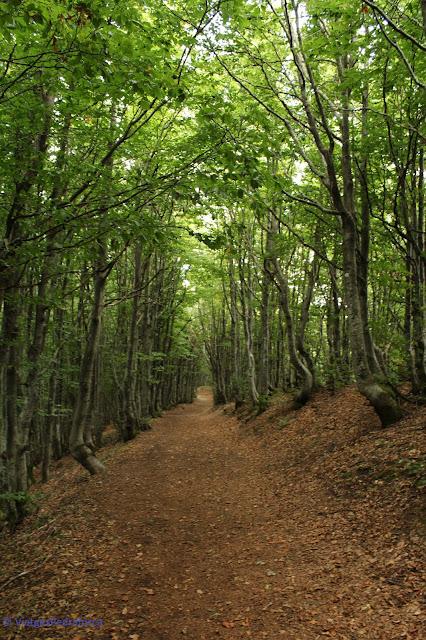 Toscana, Itàlia, senderisme, trekking, natura
