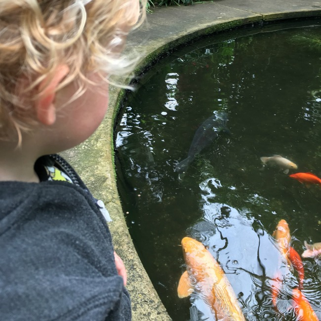 toddler-next-to-pond-with-big-fish