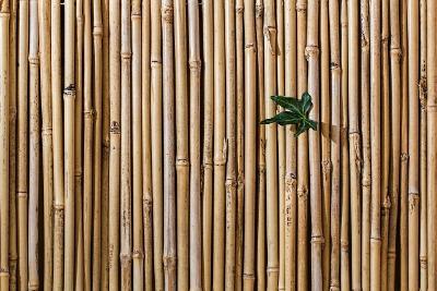 bamboe schutting tuinscherm bamboematten
