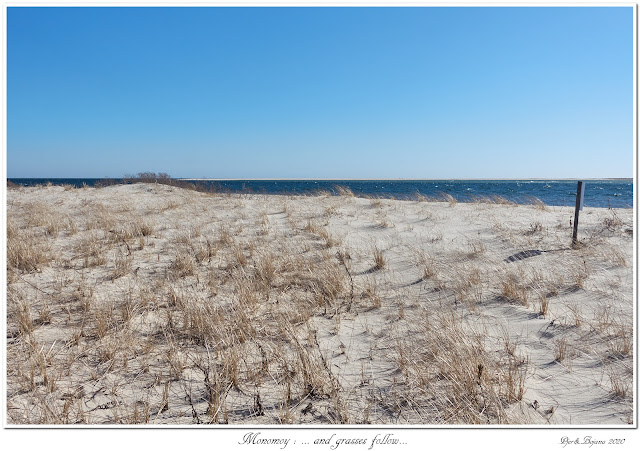 Monomoy: ... and grasses follow...