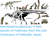 https://sciencythoughts.blogspot.com/2019/10/kamuysaurus-japonicus-new-species-of.html