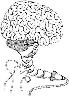 hyporg - neurospiknutí na úrovni mnohočlověka (autor: Sebastián Wortys)