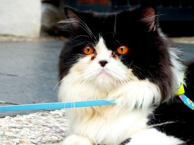 Billy : Kucing Penyebab Tanganku Dioperasi