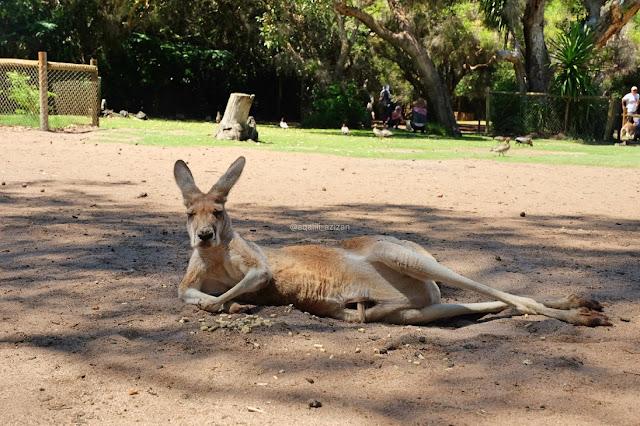 Caversham Wildlife Park Perth Curitan Aqalili