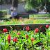 Peste 11.000 de flori și 200 de arbuști s-au plantat la Constanța în lunile mai și iunie