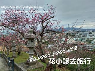 名護城公園櫻花
