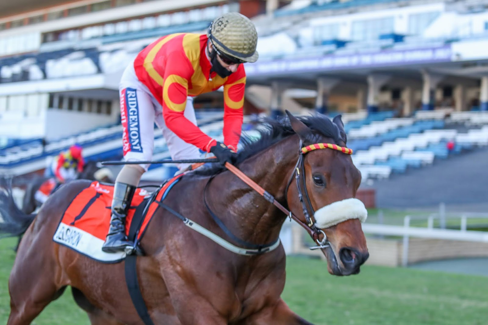 Vodacom Durban July 2020 Horse Profile - Belgarion