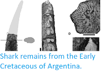http://sciencythoughts.blogspot.co.uk/2017/12/shark-remains-from-early-cretaceous-of.html