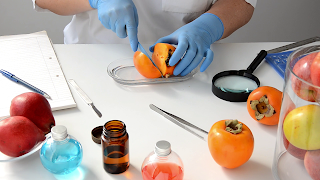 Inspecting a persimmon in laboratory