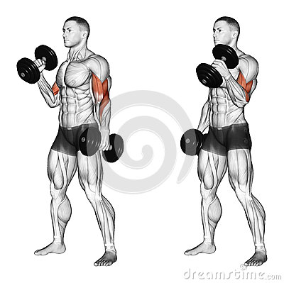 Hammer Curls for Bicep Workout