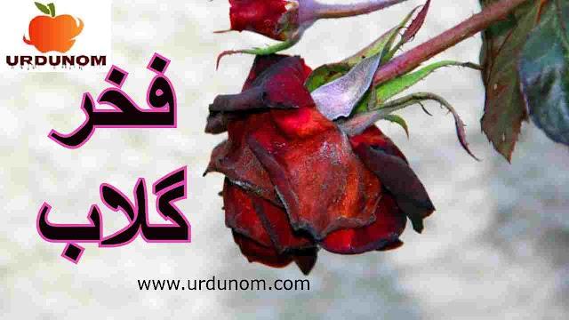 فخر گلاب | The Proud Rose